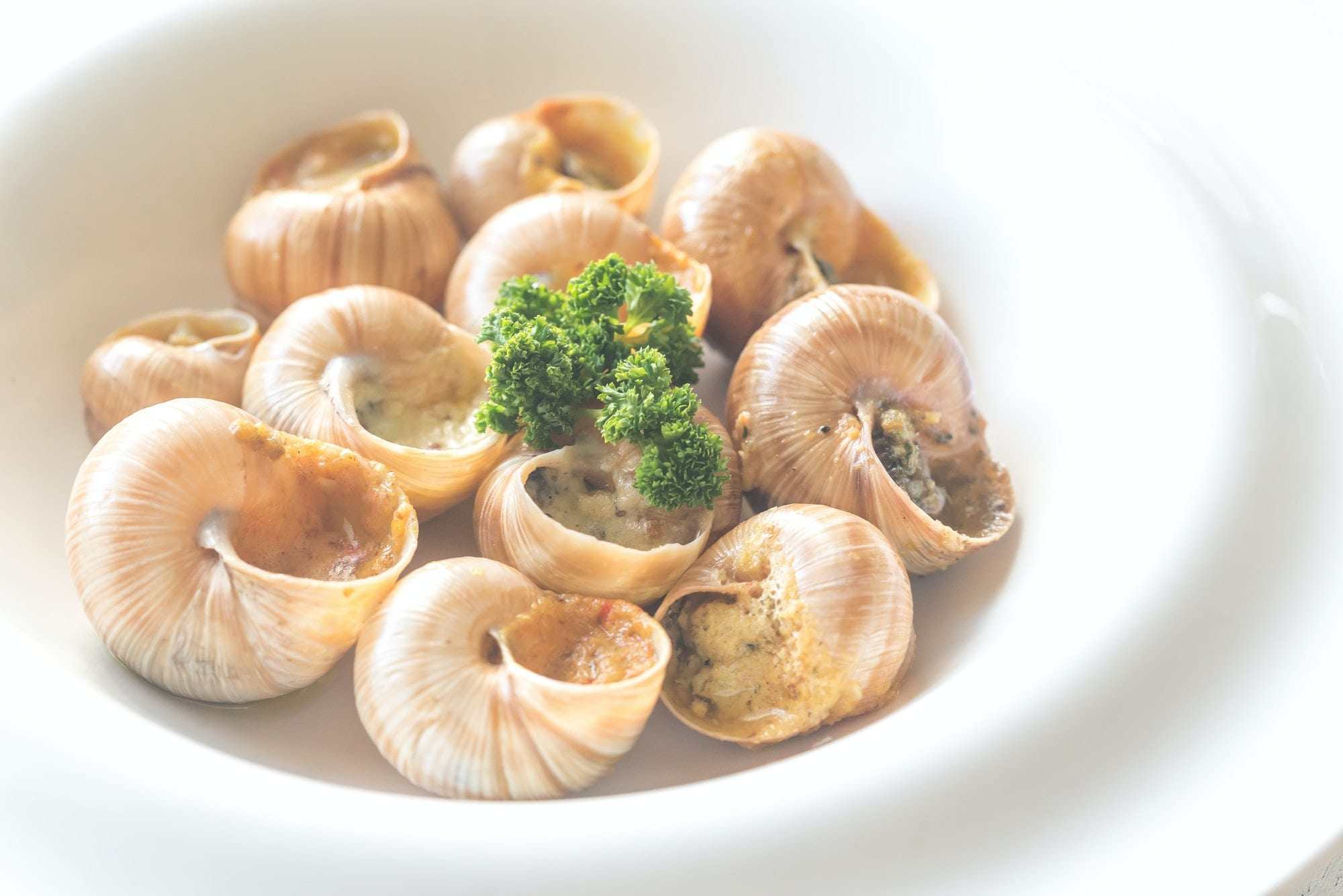Portion of cooked snails